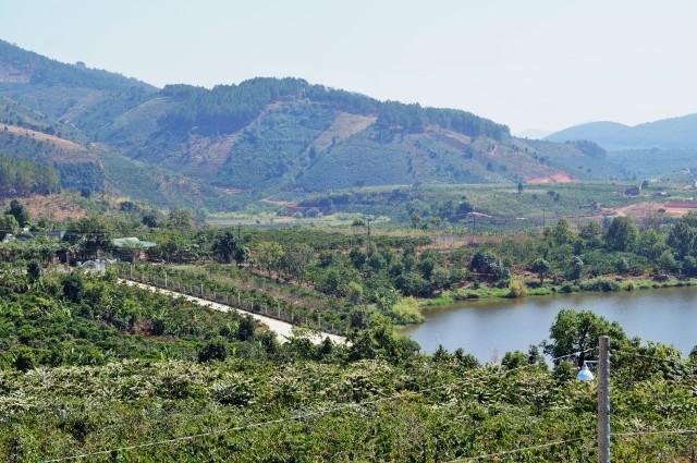 Kaffeefelder in Zentralvietnam